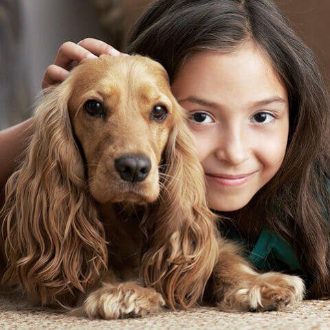 Dlaczego twój pies traci sierść?